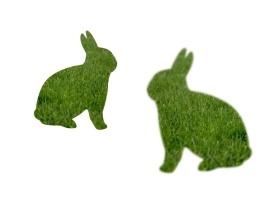 Grassy Rabbits